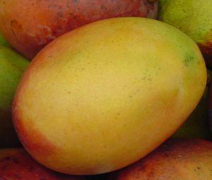 afrykańskie mango sposobem na odchudzanie